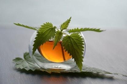 Brennesselblätter im Tee